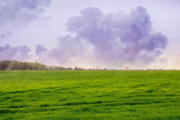 緑の草のある畑の上の大きな巻き毛の雲