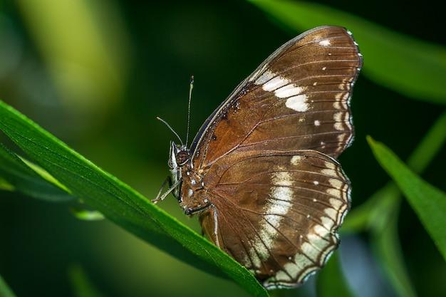 葉の上に素晴らしいeggfly
