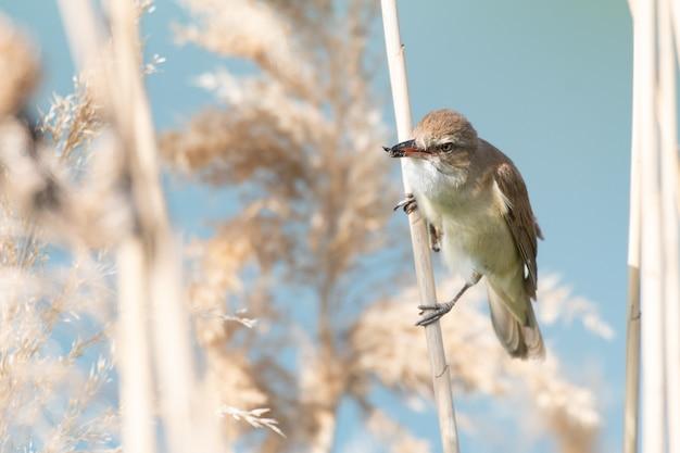 Птица камышевка с насекомым в клюве