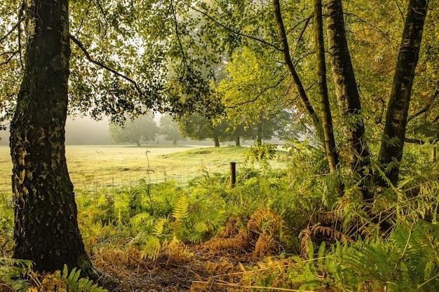 Grande scatto di un parco pieno di alberi ed erba in una giornata di sole