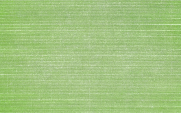 Great texture of lawn grass at the golf course, backyard, or football stadium.