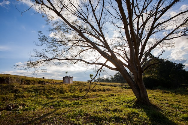 Great tree in countryside field - wide angle back light