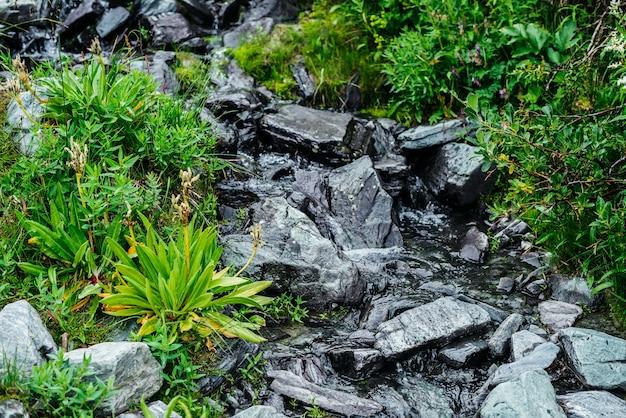 돌 사이의 샘물 근처에 다양한 풀과 꽃