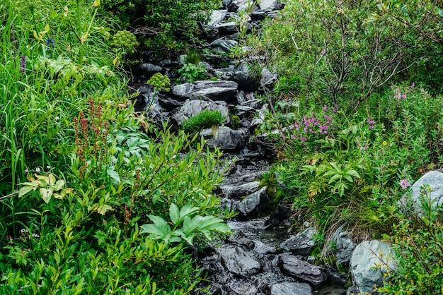 돌 사이의 샘물 근처에 다양한 풀과 꽃이 있습니다.