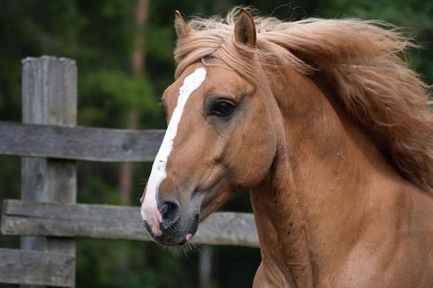 Great view of a magnificent horse