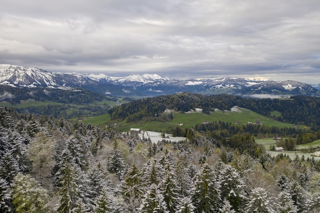 なだらかな丘と雪に覆われたトウヒの木の素晴らしい景色