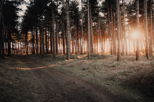 Great view of the sun shining through the trees in a forest captured in oostkapelle, netherlands