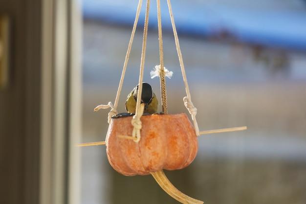 種缶の上に座っているエボシガラ。