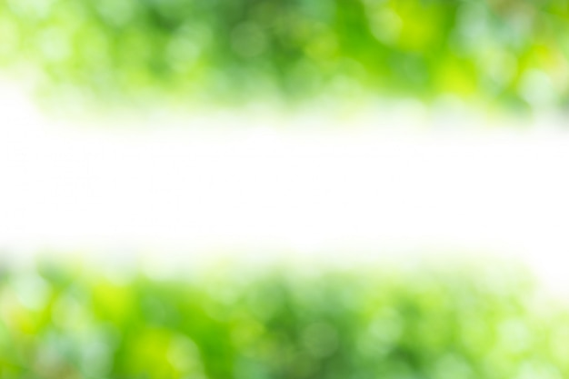 Green abstract of blur nature sunlight with white middle free space for design