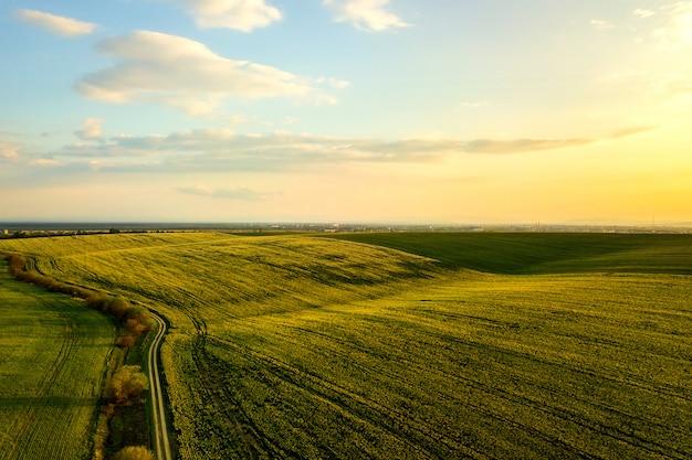菜種植物と夕暮れ時の国の未舗装の道路の成長と緑の農場