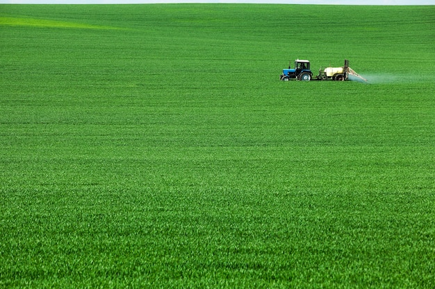 Green agricultural field with cereals, which are processed by a tractor
