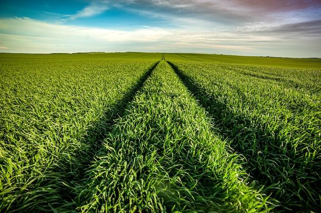 초여름에 녹색 농업 분야