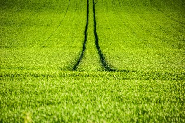 녹색 농업 분야 여름 배경