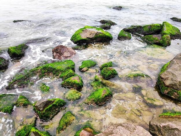 Зеленые водоросли покрыли валуны на пляже побережья океана моря. морской мох застрял на камнях. скалы, покрытые зелеными водорослями в морской воде. живописный летний пейзаж природы.