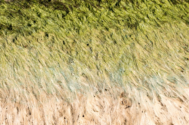 Зеленые водоросли у берега