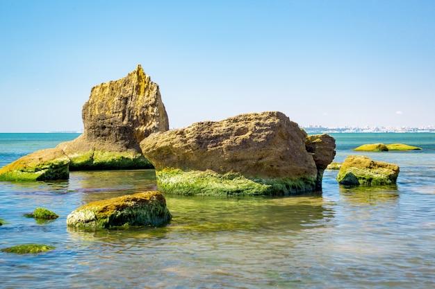 Зеленые водоросли на берегу моря и камни