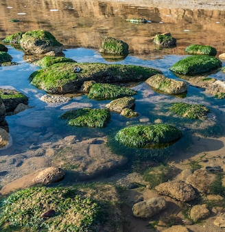Green algae on the rocks at the edge of the sea
