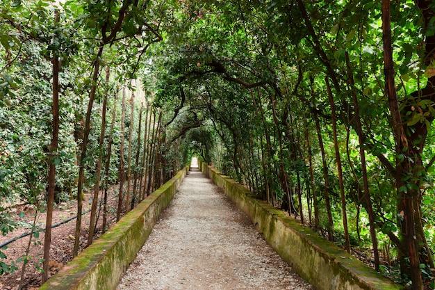 イタリア、フィレンツェ、ボーボリ庭園の緑の路地
