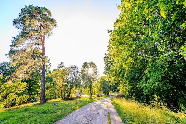 公園の緑の路地。都市公園。背の高い緑の木々。