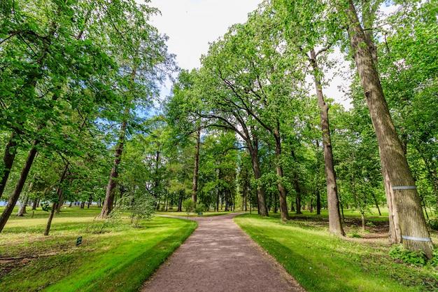公園の緑の路地