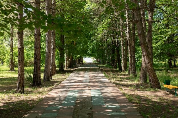 Зеленая аллея с деревьями в старом парке. дряхлый трек нуждается в ремонте. солнечный весенний день.