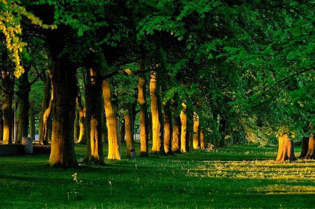 日没の夏に青々とした葉の葉を持つ木々と緑の路地