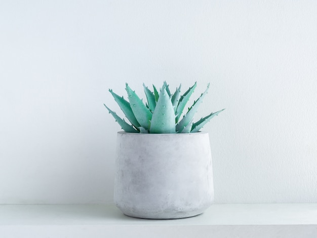 Green aloe vera succulent plant in modern geometric cement planter on white wood shelf on white