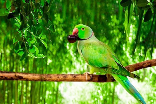 부리에 베리가 있는 녹색 아마존 앵무새는 숲의 나뭇가지에 앉아 있다