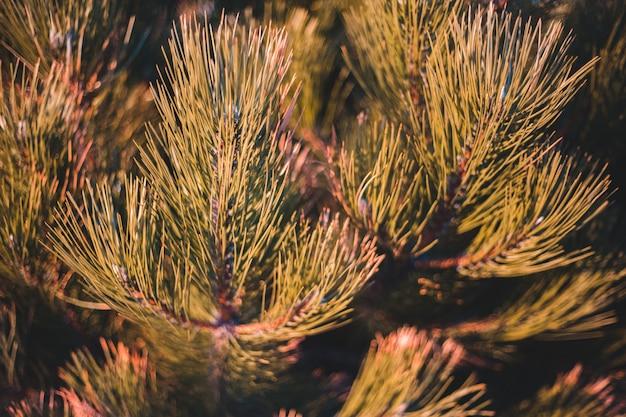 緑と茶色の松の木