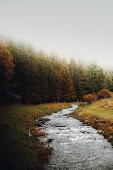 Зеленые и коричневые деревья у реки в дневное время