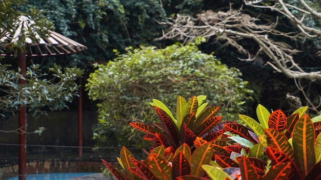 緑と赤の葉は背景を残します。ネイチャーガーデン-熱帯の春の自然植物。