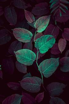 アタムシーズンの秋の色の緑と赤の植物の葉