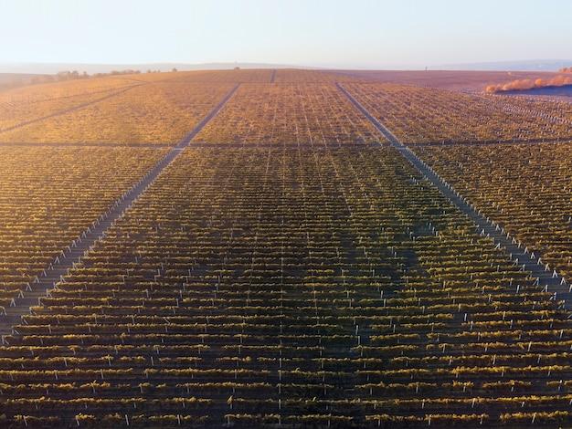 Зеленые и красные ряды виноградников на закате в молдове