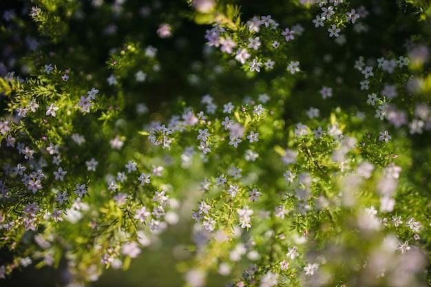 緑と白の花の植物