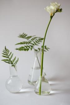 유리 비커에 녹색과 흰색 꽃이 자랍니다.