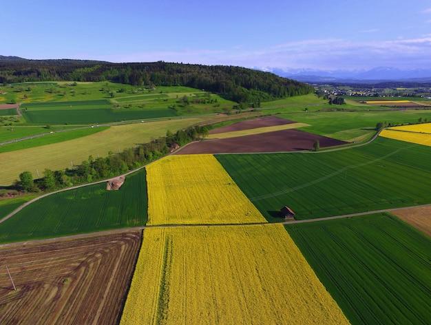 昼間の緑と黄色のフィールド