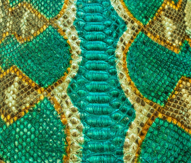 Зеленый и желтый дизайн текстуры кожи змеи
