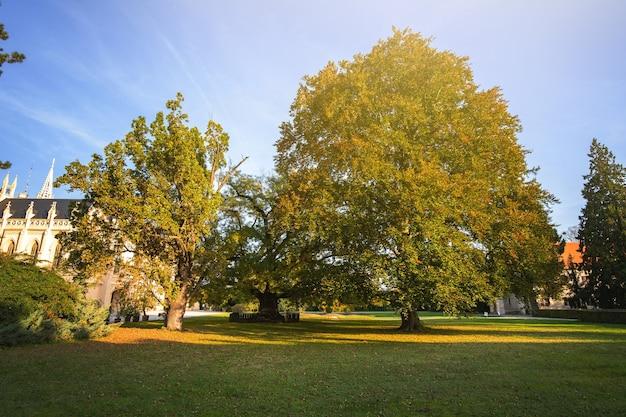 이른가 공원에서 녹색과 노란색 나무입니다.