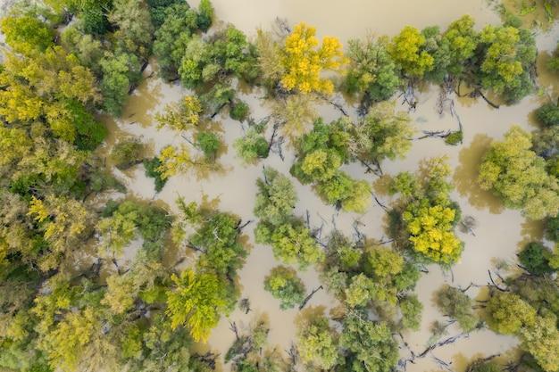 Зеленые и желтые деревья на болоте с водой, текущей вокруг них во время наводнения