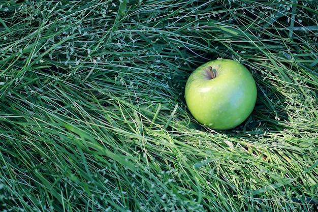 Зеленое яблоко в траве крупным планом в солнечный летний день