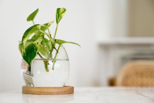 ダイニングテーブル上のガラス瓶に緑の水生植物