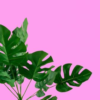 ピンクの背景に緑の人工モンステラの葉