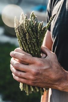 男性の手に保持されているグリーンアスパラガス