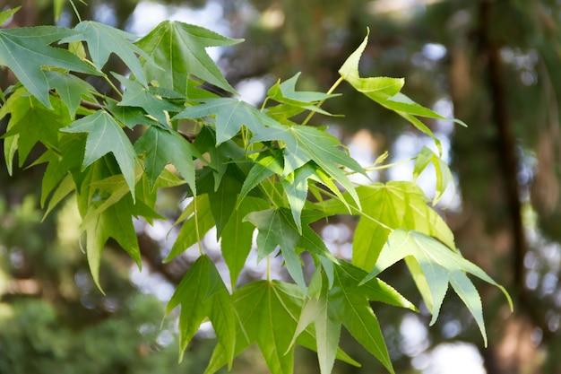 Зеленый фон abstrato растительность летом не в фокусе