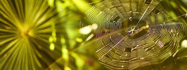 녹색 배경 및 거미줄 거미, copyspace와 배너 이미지