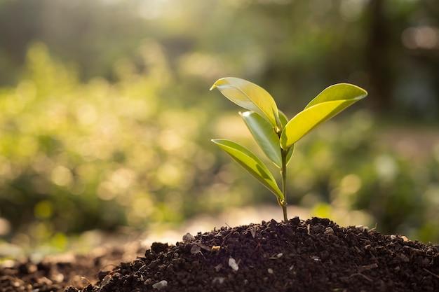 Деревья боке зеленого фона на естественной почве. лужайка. концепция сохранения леса.