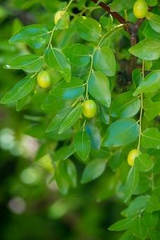 Зеленый фон из ветвей мармелада