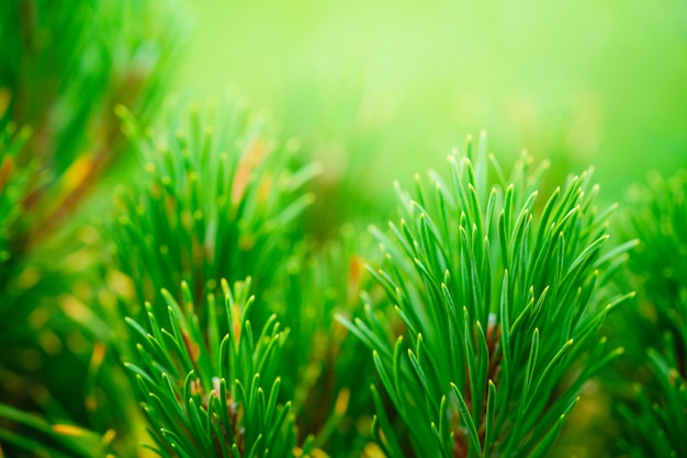 枝に生えている松の針の詳細図の緑の背景
