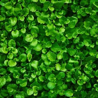 葉の緑の背景。設計のためのキャンバステクスチャを持つシート。