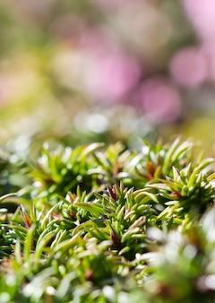 긴 퍼짐의 녹색 배경은 정원에서 잎사귀와 들어온 플록스 꽃의 새싹